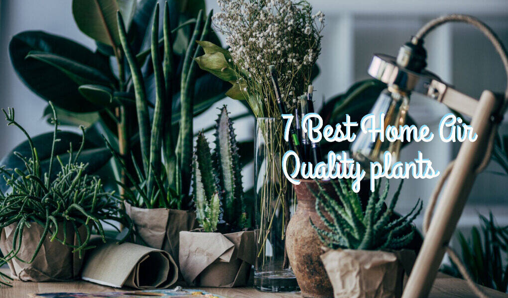 Home Air Quality plants To Improve Home Pollution (1)