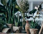 Home Air Quality plants To Improve Home Pollution
