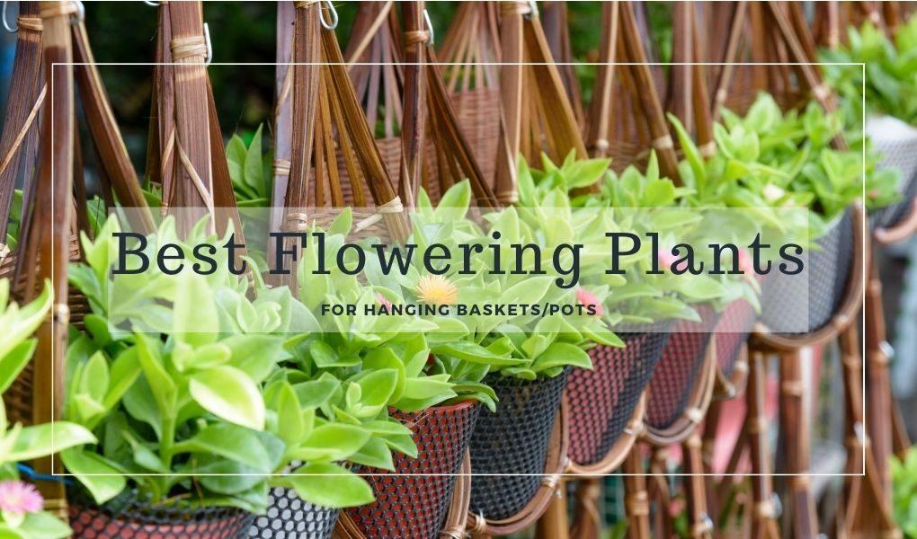Best Flowering Plants for basket